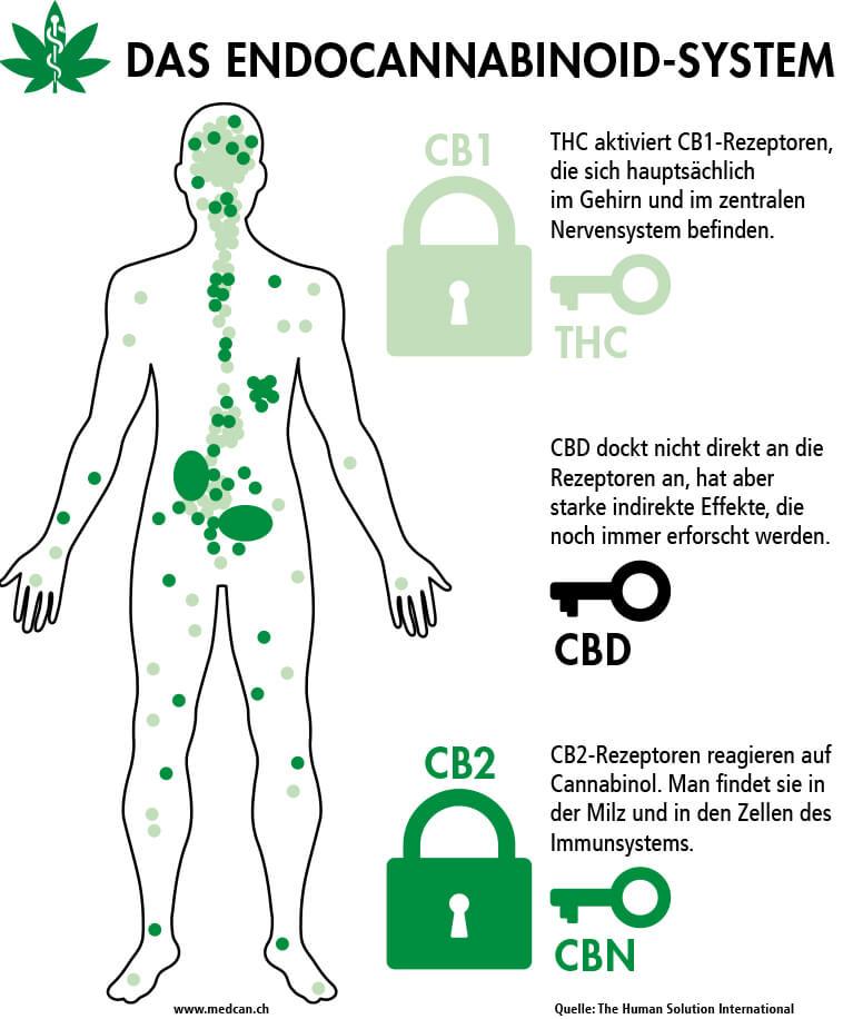 Endocannabinoid-System: Rezeptoren
